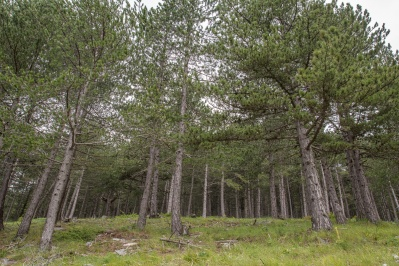 Περιοχές Natura – καταφύγια θηραμάτων Προσοτσάνης