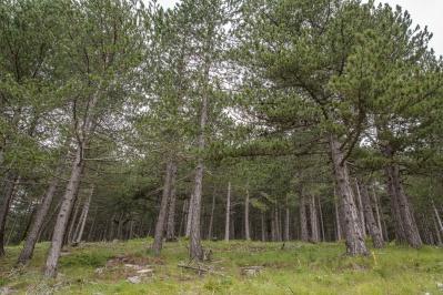 Территории Натура - заповедник Простанис