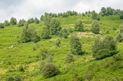 Лес Хаиду