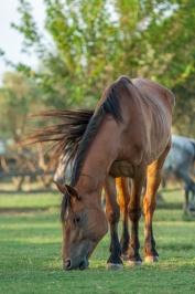 Туристические конные поездки - Ксанфи