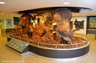 Μουσείο Φυσικής Ιστορίας στο Παρανέστι