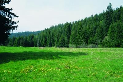 Elatia Wald oder Kara Dere