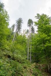 Fraktos Wald