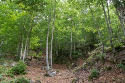 Девственный Лес (Парфено)